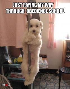 oh my gosh: Pole Dancing, Animals, Dogs, Obedience School, Stuff, Pet, Funny, Funnies
