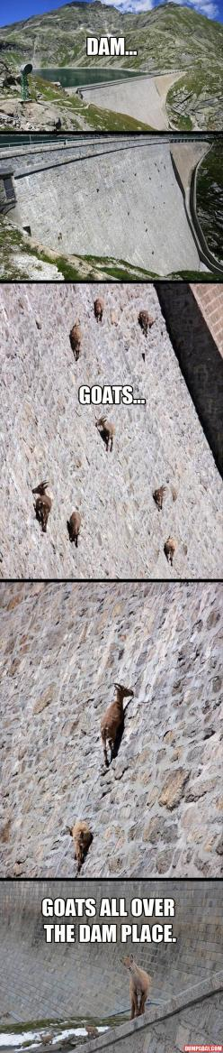 Oh, you goats.: Funny Pictures, Dam Goats, Dam Place, Funny Stuff, Smile, Damn Goats, Percy Jackson, Animal