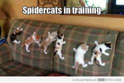 Ok I seriously think the cat on the far left is mine as a kitten. I now understand: Spidercats, Animals, Funny Cat, Spider Cats, Funnies, Kittens, Funny Animal, Kitty