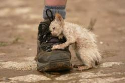 """One look and I burst into tears, they are still falling, if you ever do anything in your life, please make it one where you have helped a distressed animal, adopt a rescued animal....lets help them because if it weren't """"for us"""" they wouldn&#3"""