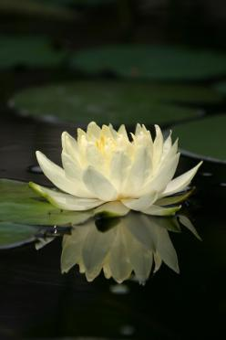 One of my pictures, one of the water lily's in the pond I built. From the heart grows beauty.: Photos, Ponds, Nature Beauty, Grows Beauty, Built