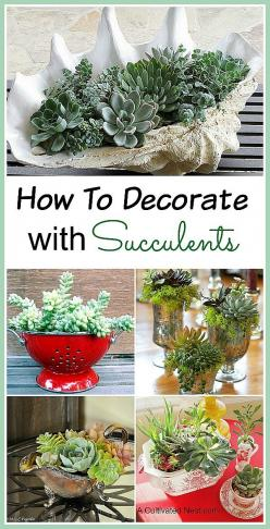 "One of the fun things about Succulents is that they look terrific in all kinds of containers and they are easy to grow (even for those with ""black thumbs"").   There are so many different shapes, sizes and colors of succulents that it's easy to make a beau"
