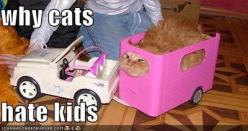 One of the *many* reasons...: Animals, Giggle, Funny Stuff, Poor Kitty, Funnies, Hate Kids, Cats Hate