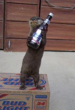Otters really do understand how to live the good life.: Animals, Beer, Pet, Otters, Funny Stuff, Funny Animal, Things, Offer