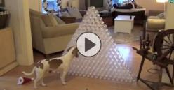 Owner Captures Christmas Morning Video of His Dog's Favorite Gift Ever!: Receives 210, Plastic Bottles, Dogs, Christmas Presents, 210 Plastic, Dog Receives, Water Bottles