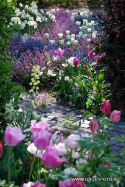 Paars, wit en roze in de tuin - Evidence of God's love for us....and the creative ability he endowed us with....: Spring Flowers, Secret Garden, Beautiful Gardens, Flowers Garden, Garden