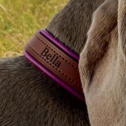 Padded Leather Dog Collars. Love this for Hermione.: Leather Dog Collars, Personalized Dog Collar, Christmas Dog Collars, Christmas Gifts For Dogs, Dog Collars Leather, Christmas For Puppies, Christmas Collars, Leather Collars Dog
