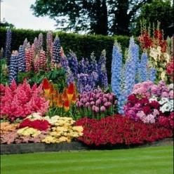 Perennials That Bloom All Summer: Garden Ideas, Yard, Perennial Plant, Gardens, Flowers Garden