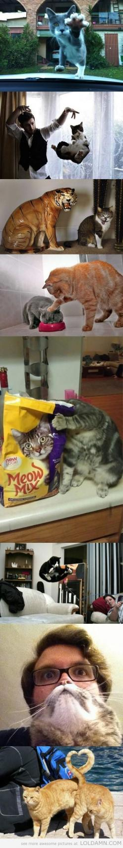 Perfectly Timed Cat Photos: Cats Cats, Funny Cats, So Funny, Timed Cat, Can'T Stop Laughing, Cat Photos, Animal, Cat Lady
