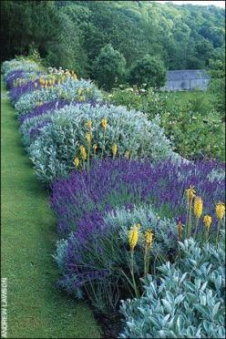 Pick three plants. Repeat. You cant go wrong--this reminds me of the south of France.: Lavender Border, Garden Ideas, Color, Border Garden, Pick Three, Three Plants