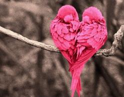 Pink Heart Love Birds.. would be an awesome detailed heart tattoo: Animals, Nature, Pink Heart, Beautiful, Valentine, Birds, Pink Bird