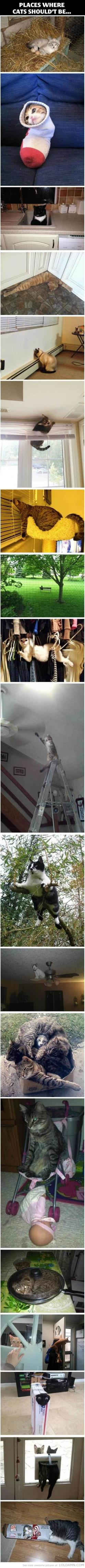 Places where cats shouldn't be... but go anyway, because they don't care: I Love Cats, Funny Cats, Crazy Cat, So Funny, Cats Shouldn T, Kitty, Animal, Cat Lady