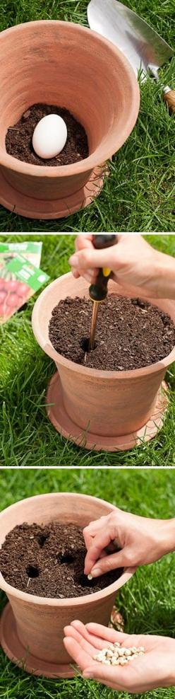 Planting a vegetable garden in pots - Place raw uncracked egg in bottom.  As it decomposes, it naturally fertilizes your mini- veg garden.  Do outside of course!!!: Raw Uncracked, Place Raw, Vegetables Garden, Naturally Fertilizes, Uncracked Egg, Vegetabl