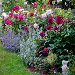 Plants with multiple petals, such as roses and peonies, are cottage-style favorites, and they have the added benefit of sweet scent. Contrast heights within beds by using spiky classics such as foxgloves and delphiniums.: Cottage Style Landscape, Garden I