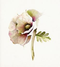 poppy art, floral, french country, nature, cream, minimalist, flower, cottage decor-Poppy Art- Archival print of watercolor- bontanical art. $20.00, via Etsy.: Art Watercolor, Art Floral, Watercolors, Water Color, Watercolor Flower, French Country, Poppie