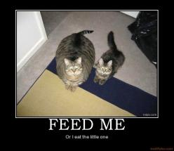 Priceless: Animals, Funny Stuff, Feed, Humor, Funnies, Fat Cats, Things, Funny Animal