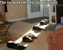 Ray of Death: Cats, Animals, Dogs, Pet, Funny Stuff, Funnie, Death Ray