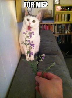 Really, for me?: Funny Animals, Cat Face, Kitten, Kitteh, Funny Cats, Crazy Cat, Kitty, Cat Lady