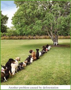 reminds me of the women's restroom at a concert: Animals, Dogs, Pet, Trees, Funny Stuff, Funnies, Humor
