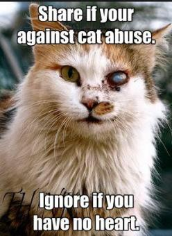 Repin please: Animal Rights, Animal Cruelty, Deserve Care, Animal Abuse, Cat Abuse, Repost, Poor Cat, Animalabuse, Kitty