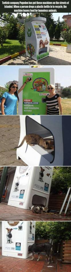 REPINED: A Treat For Homeless Animals.... why are we NOT doing this in the US?!: Random Pictures, Homeless People, Ideas, Plastic Bottles, Humanity Restored, Faith In Humanity, Faith Restored, Awesome Idea