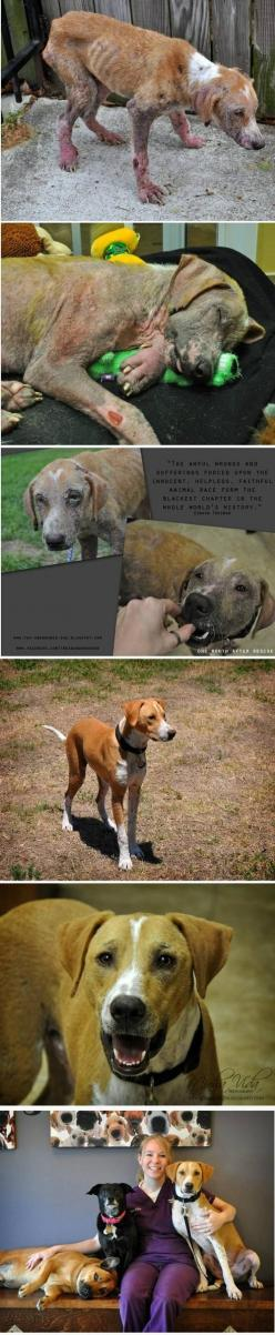 RESCUED - what an amazing transformation due to love.: Dogs, Animal Cruelty, Pet, Animal Abuse, People, Friend, Happy Endings, So Sad