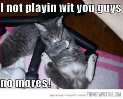 Screw you guys: Cats, Funny Animals, Funny Cat, Funny Stuff, Funnies, Humor, Kitty