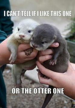 Sea otter | SEA OTTERS!!!!  The Otter One!: Babies, Baby Otters, Stuff, Pet, Creatures, Things, Baby Animals, Babyotters, Adorable Animal