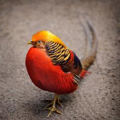"""She has wings to fly... anytime anywhere. But at times she plants her feet firmly on the ground... Something to ponder about... 