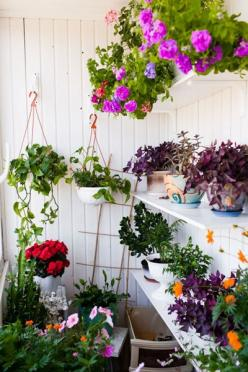 shelves of plants {an unusual garden set up}: Summer Patio, Vertical Garden, Hanging Flower, Modern Garden, Deco Design Garden, Perfect Summer
