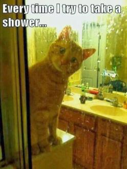 Silly funny cat #funnycatmemes #funnycats find more funny cats here http://www.funnycatsblog.com: Funny Animals, Funny Cats, Crazy Cat, Shower, Funnies, Kitty