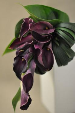 Simple but gorgeous and sophisticated, contemporary shaped bouquet of deep plum calla lilies and looped, tropical foliage.: Shaped Bouquet, Plum Calla, Lily Bouquet, Calla Lilies, Callalily, Wedding, Black Calla, Calla Lily