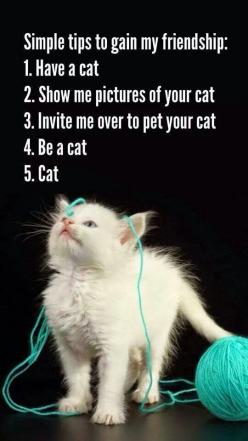 Simple Tips To Gain My Friendship: 1. Have a cat, 2. Show me pictures of your cat, 3. Invite me over to pet your cat, 4. Be a cat. 5. Cat: Cats Cats, Kitty Cats, Animals, Pet, Crazy Cat, Kittens, Kitties, Cat Lady