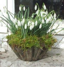 Snowdrops: Garden Container, Container Garden, Idea, French Country Homes, Outdoor, Gardens, Improvised Lunch, Flower