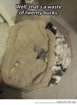 So funny and really cute!: Cats, Funny Animals, Dogs, Stuff, Pet, Funnies, Puppy, Twenty Buck