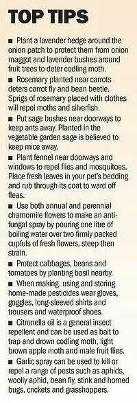 Some great and simple gardening tips!: Green Thumb, Planting Tips, Greenthumb, Garden Tips, Companion Planting, Vegetable Garden