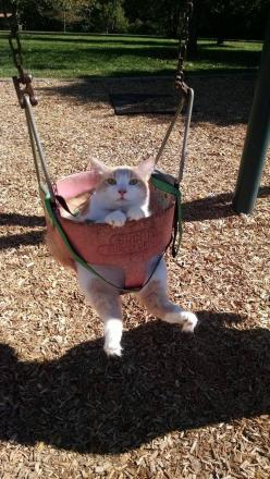 """Sometimes I sit in my swing and wonder…why can't we all just get along?"" 