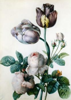 // sotiga blomster                                                                                                                        Floral             by        Hey Little Rich Girl      on        Flickr: Botanical Illustration, Color, Tulip, Cabbag