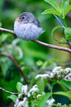 (Source: musicforthemorningafter-, via all-things-bright-and-beyootiful): Animals, Sweet, Beautiful Birds, Garden, Fluff Ball