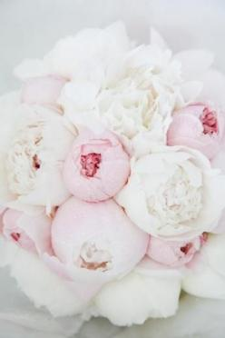 Spring bouquet of white and pale pink peonies… blooming mid to late May here in Virginia.: Wedding Ideas, Wedding Flowers, White Peonies, Peonies Bouquet, Floral, Pink Peonies, Favorite Flower
