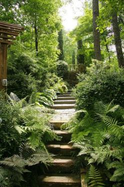 stepped path through a lush woodland garden at the home of Jim Scott, on Lake Martin, Alabama: Secret Garden, Garden Paths, Shade Garden, Gardens, Ferns Embrace, Woodland Garden, Garden