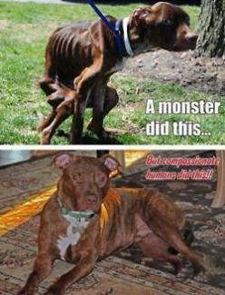 stop animal abuse. pit bulls are clearly not the monsters: Animals, Dogs, Animal Cruelty, Animal Abuse, Monsters, People