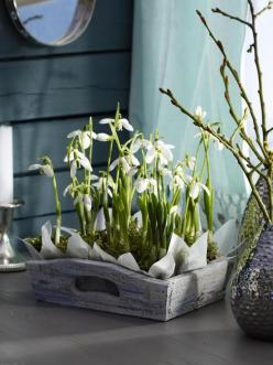 STYLIZIMO BLOG: { Spring flowers - how can we use them? }: Ideas, Spring Flowers, Easter, Lens, Garden, Floral