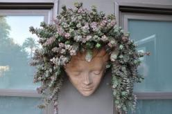 succulent hair --love this...: Succulent Hair, Hairs, Container, Headplanter, Gardening, Gardens, Flower