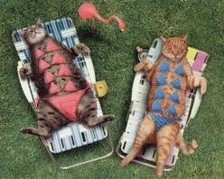 Sunbathing cats take stand against nudity. Show excessive style in process :): Cats, Animals, Pet, Funny Stuff, Humor, Funnies, Bikini