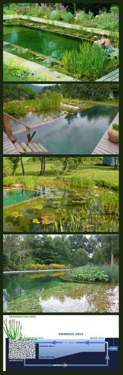 swimming ponds…….Cash Back on your House Renovation or Pool ,,shop your way to a passive income , ,,www.mylyconet.com/iboiya/: House Renovation, Natural Pond, Piscina Naturales Ideas, Natural Swimming Pools, Natural Pools, Swimming Ponds, Natural Swimming