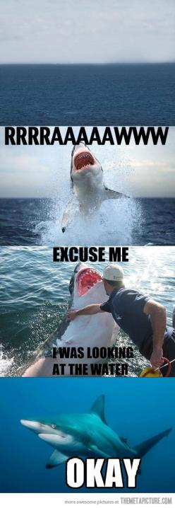 """Sydney! Dane cook """"and the shark grabbed my leg. Well how did you get away? Well I punched him and he ahh let me go! So your telling me a you punched a great white shark and the fucking shark goes ALRIGHTTT!!!!!!!!!!!: Lol Funny, Excuseme, Excuse Me,"""