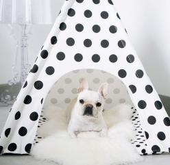 Teepee life! #pipolli www.pipolli.com: Frenchie Cuteness, Teepee Life, Baby Pups, French Bulldogs, Animal Cuteness, Animal Fun, Life Chose, Bulldog Obsessed, Www Pipolli Com Teepeelife