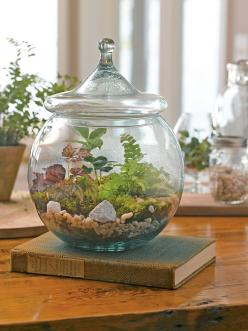 Terrarium Supplies: DIY Terrarium Kit | Gardener's Supply: Gift, Diy'S, Lid Includes, Terrarium Supplies, Diy Terrarium, Container Gardening