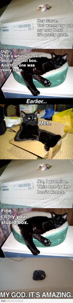 That last frame...hilarious.: Giggle, Funny Cats, Boxes, Crazy Cat, Hey Steve, Animal